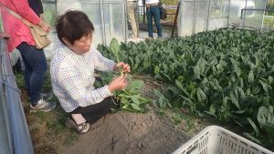 服巻さんによる収穫後作業