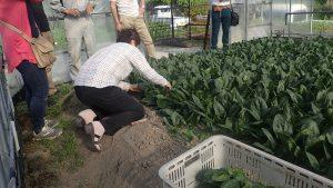 服巻さんの収穫作業