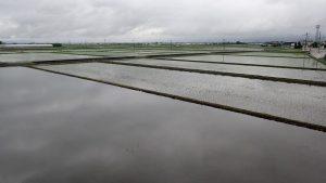 田んぼの治水能力