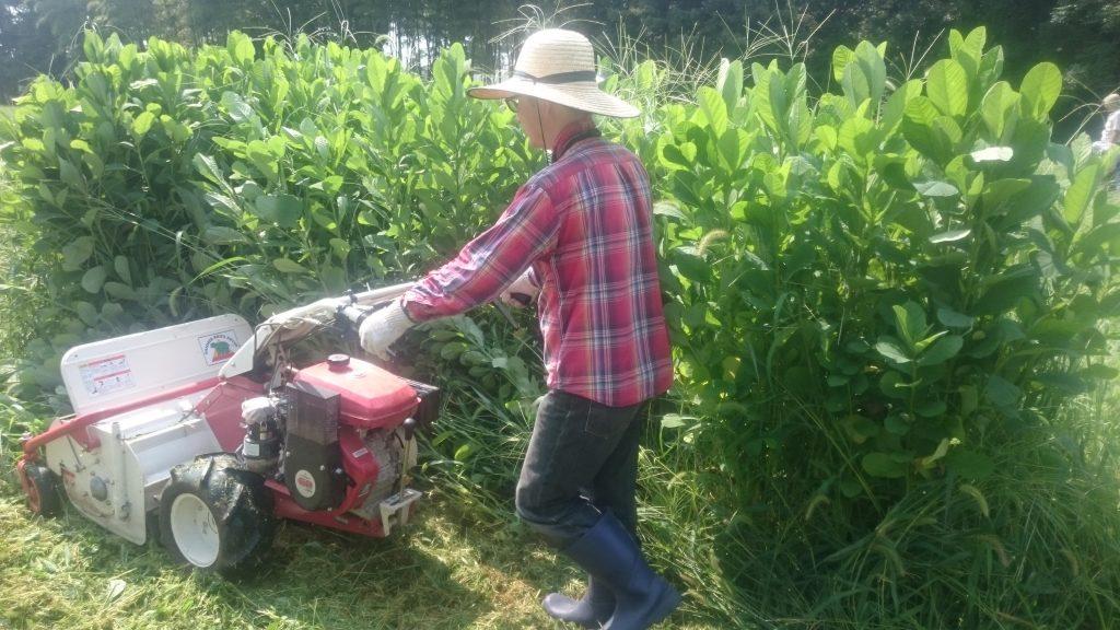 ハンマーナイフモアで緑肥刈込