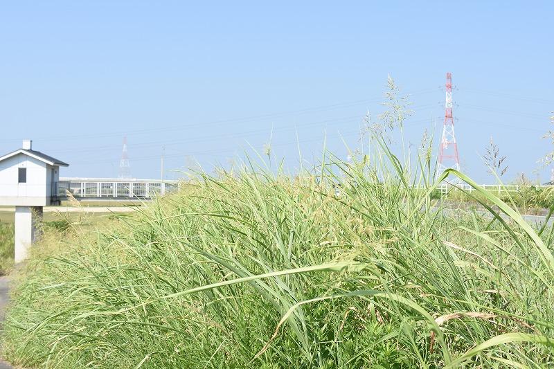 堤防雑草の写真